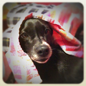 Support Coastal Pet Rescue in the Huggies UltraHug Contest!